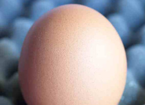 egg crate foam